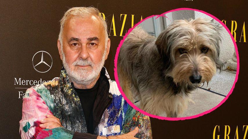 Nach Tod von Oskar 2: Udo Walz adoptiert Hund namens Oskar 3