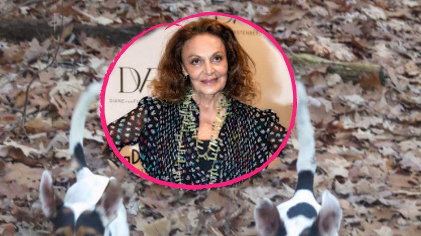 Wie bitte? Diane von Furstenberg ließ toten Hund klonen