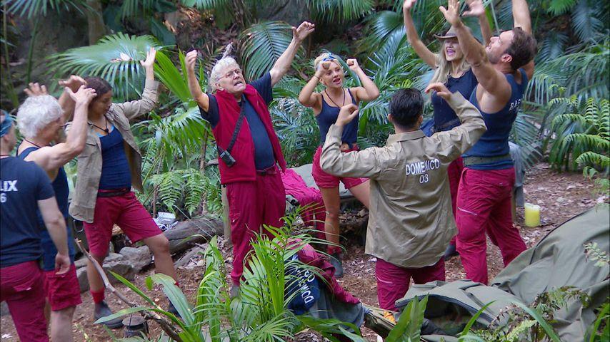 Weniger Zuschauer als 2018: So kam der Dschungel-Auftakt an!