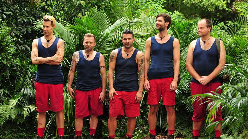 Sarah Joelle ist raus! Wer ist nach Tag 8 Dschungel-Favorit?