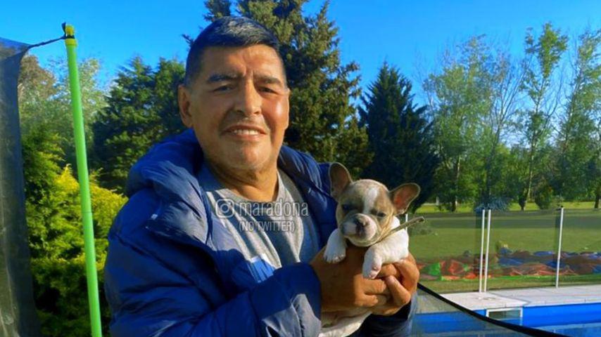 Diego Maradona mit seinem Hund Lola im September 2020