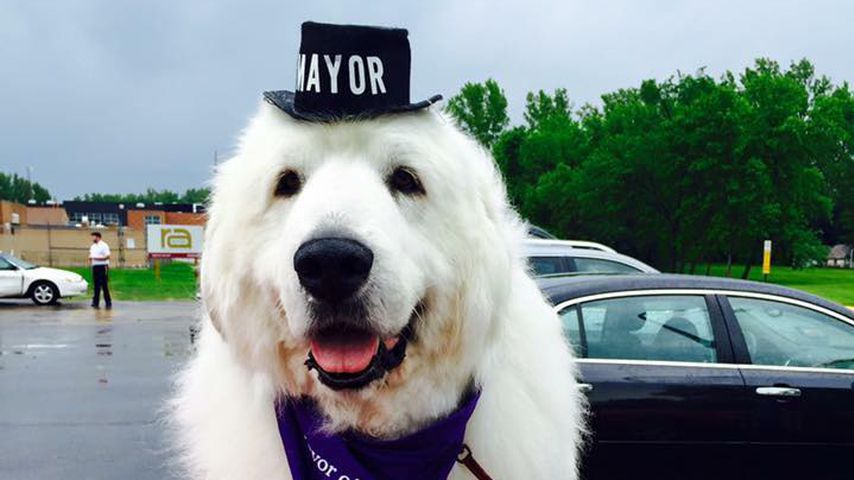 Duke the Mayor im Mai 2016