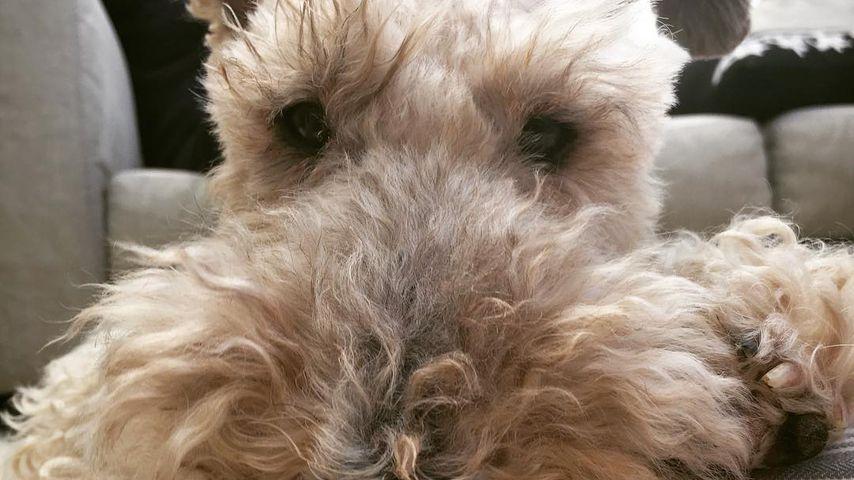 Emilias Hund Roxy