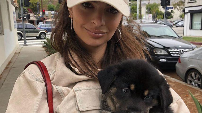 Emily Ratajkowski und ihr Hund Colombo