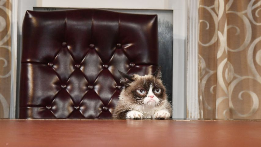 Grumpy Cat bei einem Meet and Greet in Washington