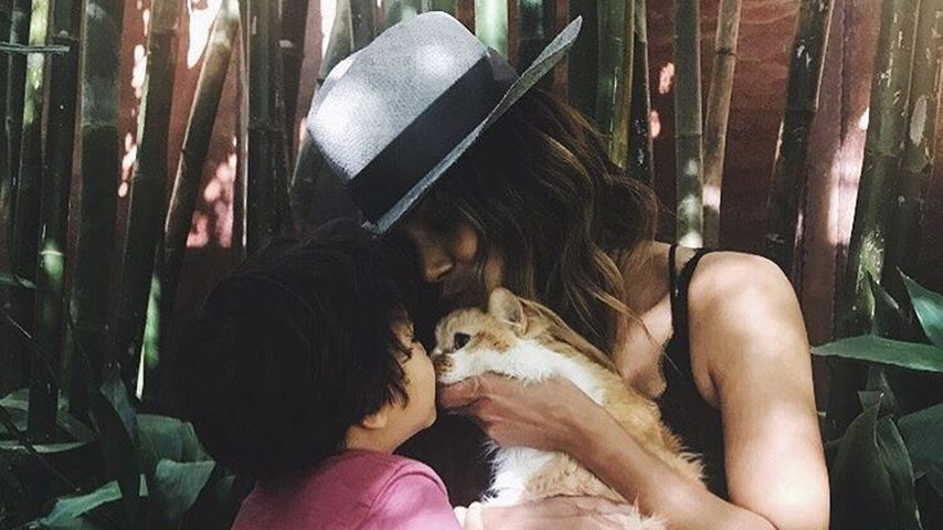 Traurig: Halle Berrys Katze verliert Kampf gegen Gehirntumor
