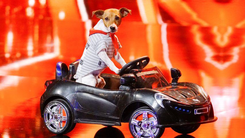 """Hund Pepsi bei """"Das Supertalent"""""""