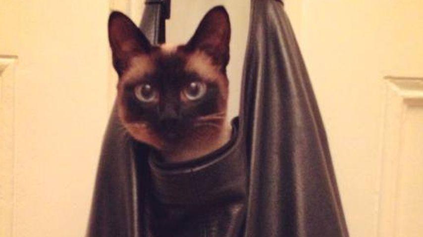 Wer lässt denn hier seine Katze so hängen?