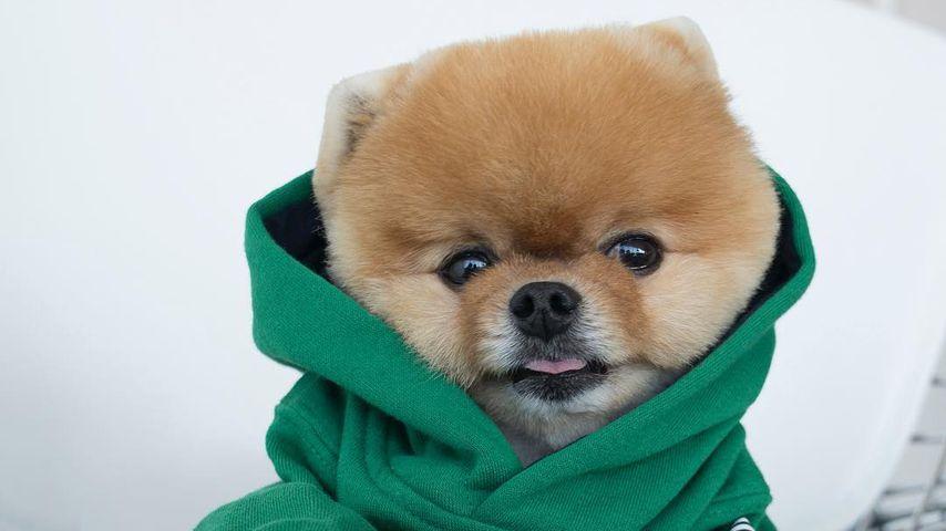 Wuff, wuff, Welthundetag: Das sind die coolsten Insta-Dogs!