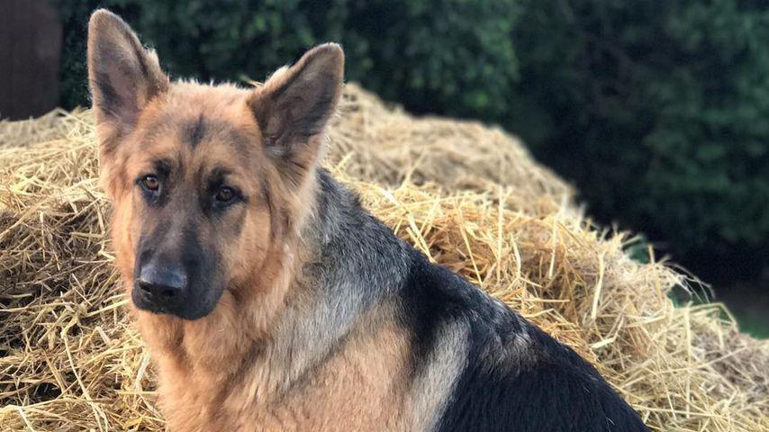 Katie Price' Hund Queenie