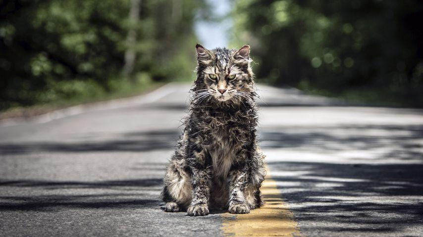 """Aus """"Friedhof der Kuscheltiere"""": Katze Leo ist gestorben!"""