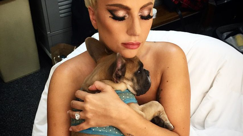 Lady Gaga mit Hund Koji