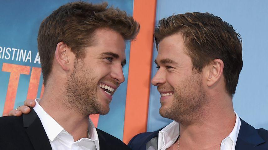 Liam und Chris Hemsworth im Juli 2015