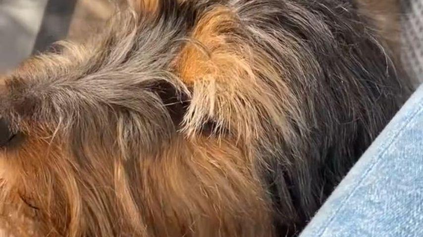 Luca Wetzel mit einem wuscheligen Hund