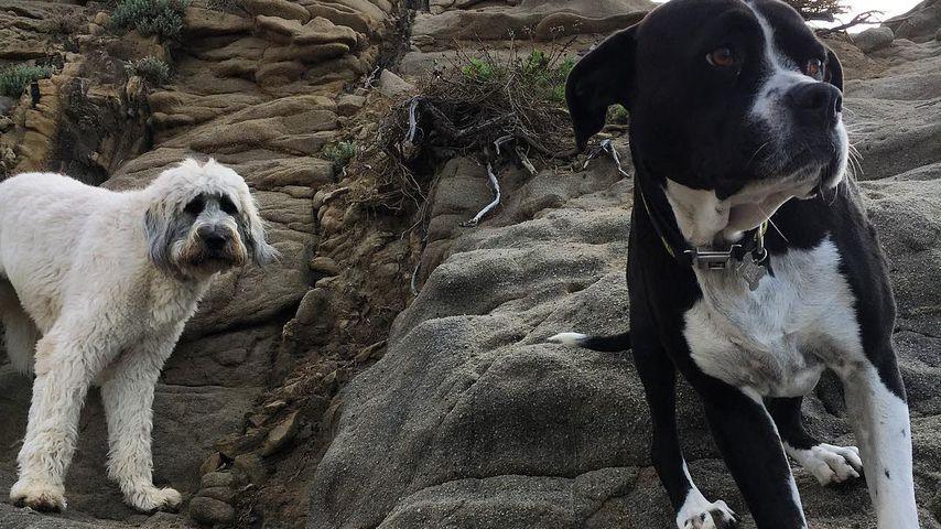 Mary Jane und Dora – Zwei der Hunde von Miley Cyrus und Liam Hemsworth