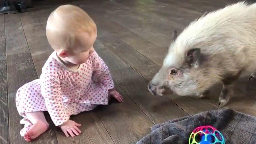 Supersüß: Mia Rose Müller spielt mit Hausschweinchen Uwe!