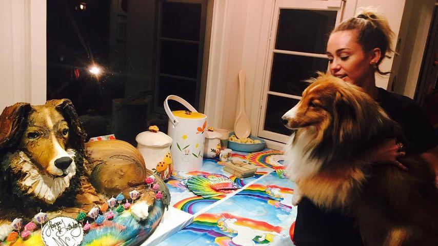 Statt großer Star-Party: So feierte Miley Cyrus ihren B-Day!