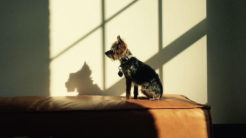 Naomi Watts' verstorbener Hund Bob