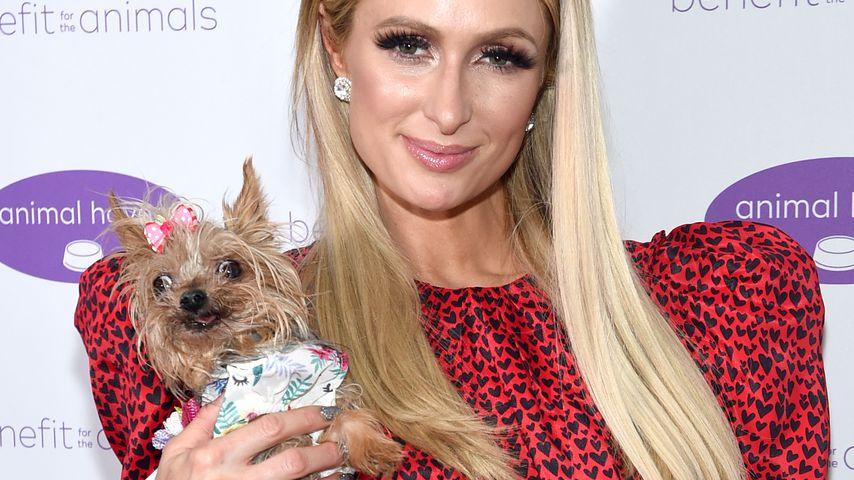 Paris Hilton im Mai 2019