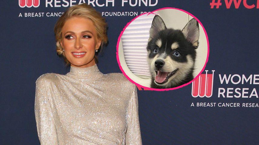 Liebes-Jubiläum: Paris Hilton bekommt Hündchen vom Freund!