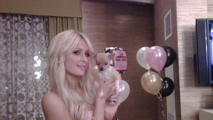 Paris Hilton ist nun 20-fache Hunde-Mutter