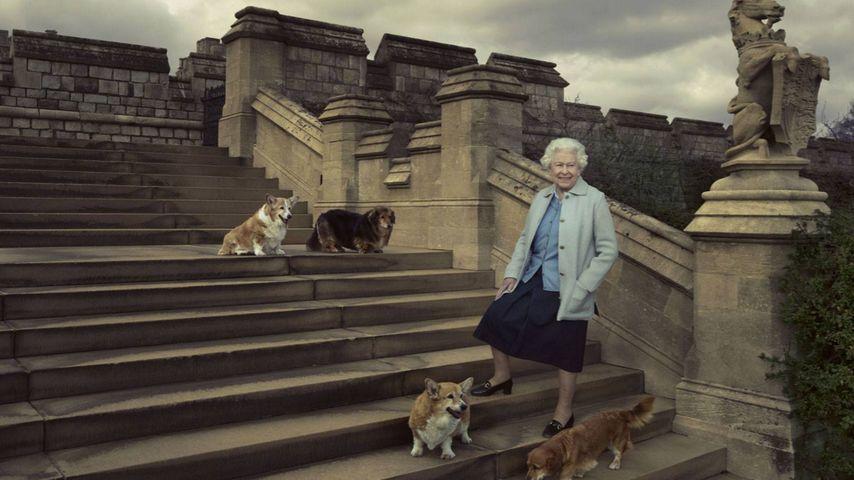 Queen Elizabeth II. mit ihren Hunden