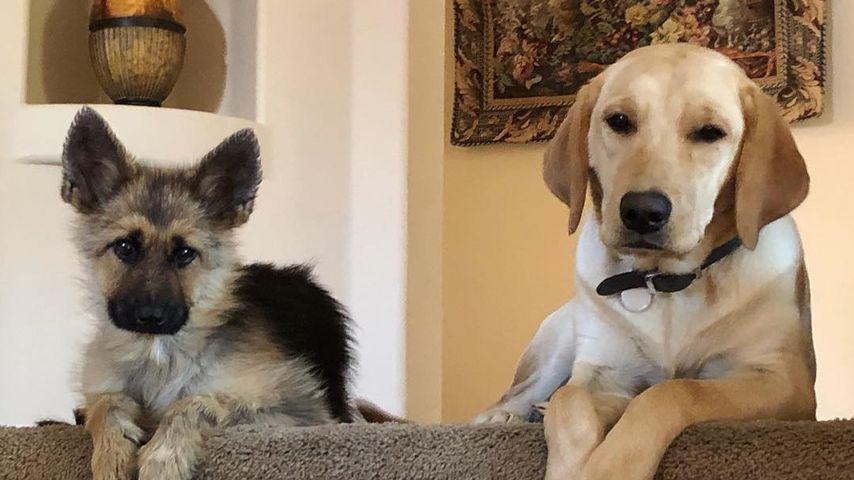 Ranger und ein Labrador