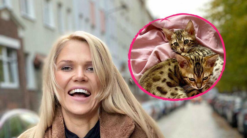 Tierischer Zuwachs: Sara Kulka ist jetzt auch Katzen-Mama