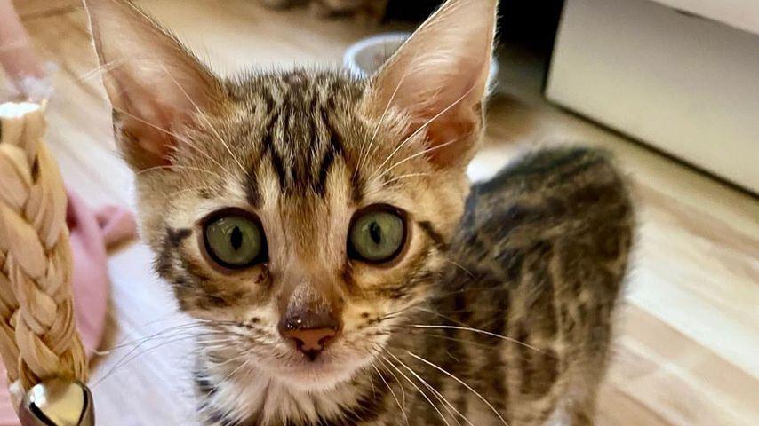 Sara Kulkas Katze im Juni 2020