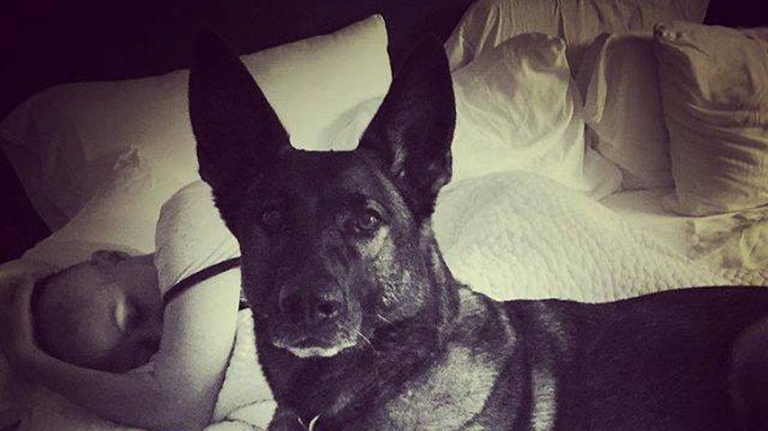 Shannen Doherty mit ihrem Hund