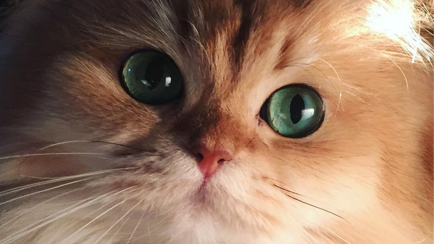 Smoothie the Cat, Instagram-Star