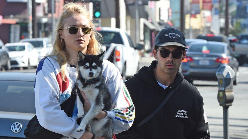 Mit Hund im Frack: So schön war Sophie & Joe Jonas' Hochzeit