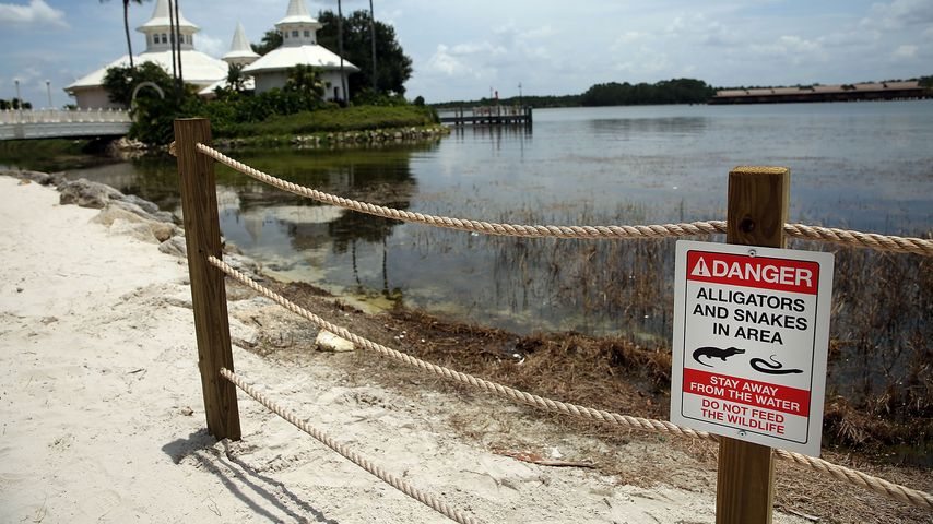 Strandabschnitt im Disney-Resort, an dem die Alligatorattacke geschah