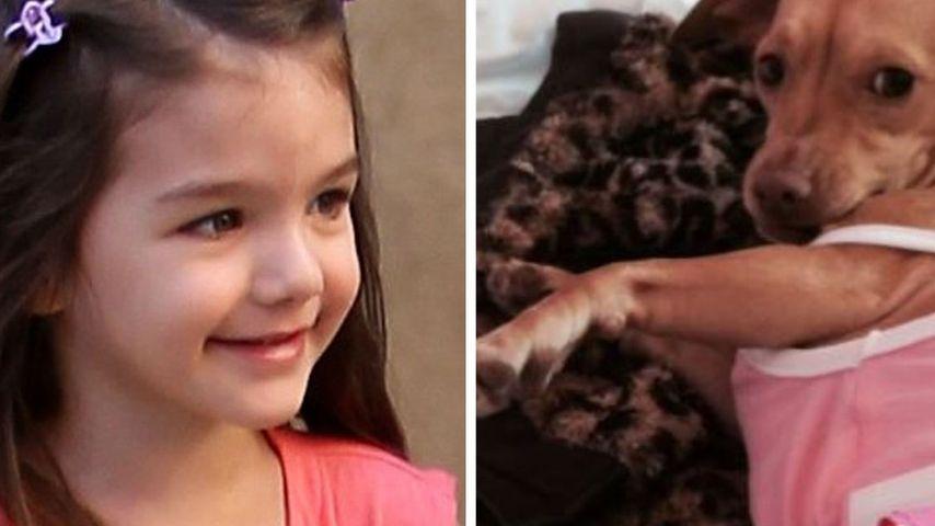 Suri Cruise: Entlaufener Chihuahua ist wieder da!