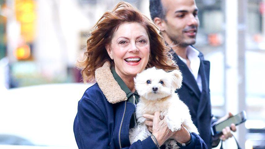 Susan Sarandon bei ihrer Ankunft im SiriusXM Radiostudio in New York. Mit dabei: Ihr Hund!