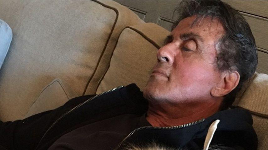Softer Action-Star: Sylvester Stallone kuschelt mit Hündchen