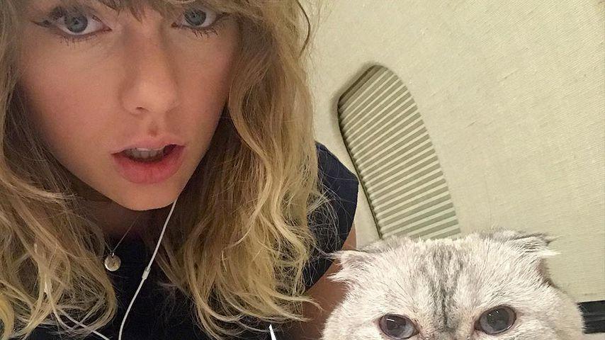 Taylor Swift und ihre Katze im November 2017