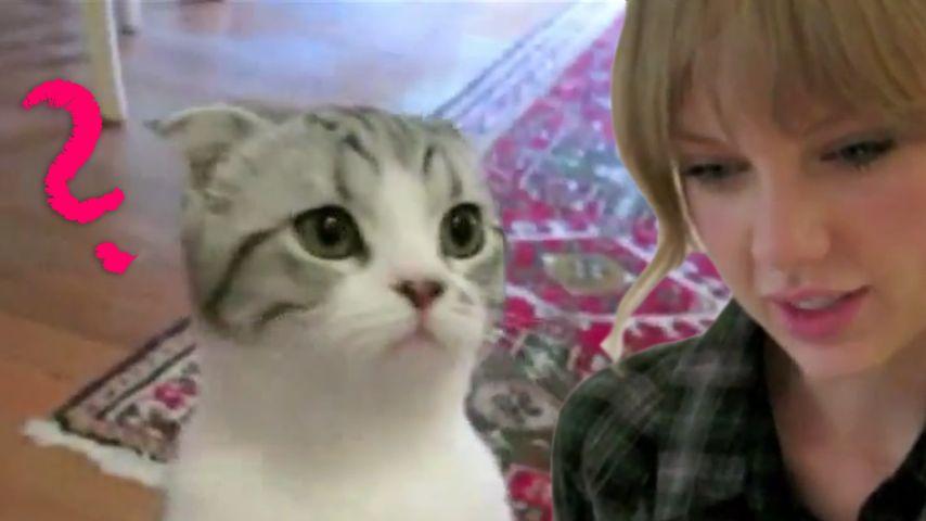Taylor Swift: Nachhilfe für ihre Katze Meredith