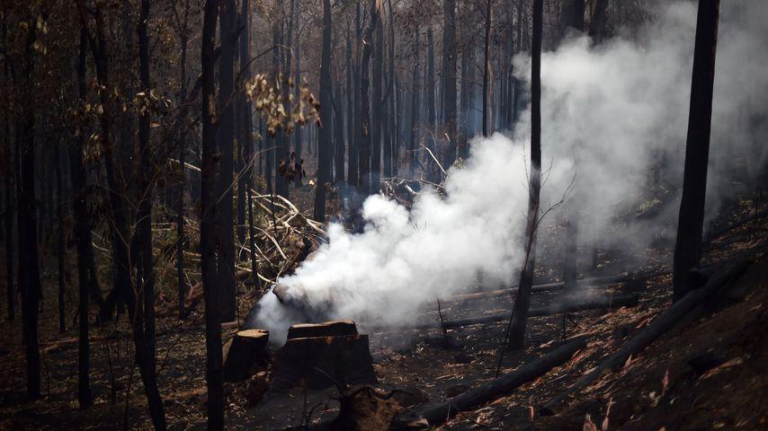 Waldbrand in Nowra (Australien)