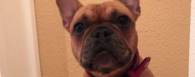 Angelina Hegers Hund Lotti vor dem Geburtstagswurstkuchen