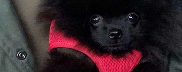 Dagi Bees Hund Zula
